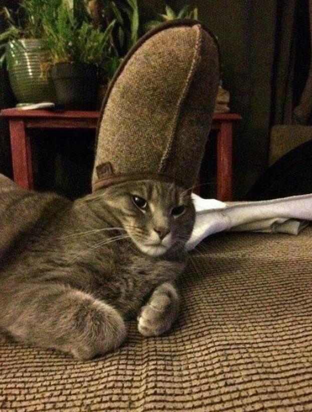 Кот кардинала животная мода, животные, животные и люди, коты, показ мод, смешно, фото, шляпки