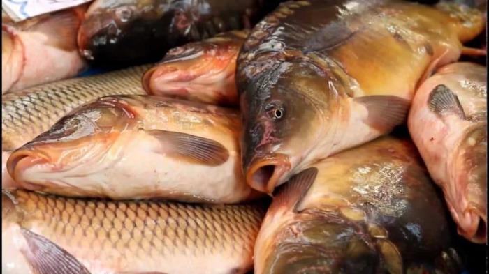Со свежей рыбой все не просто. /Фото: yandex.ua.