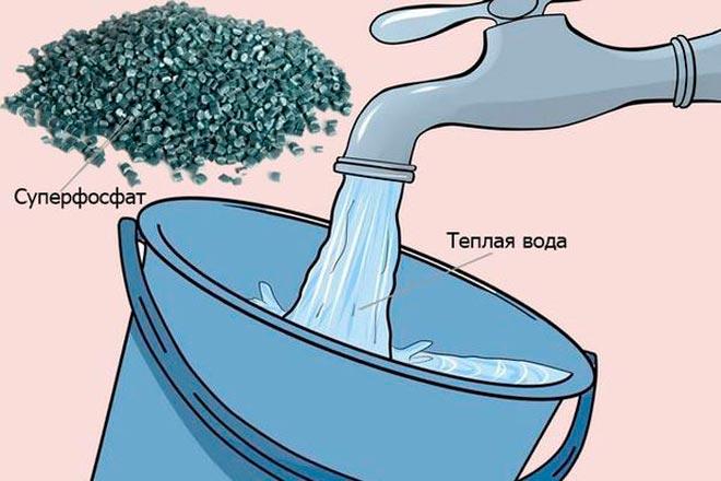 суперфосфат и вода