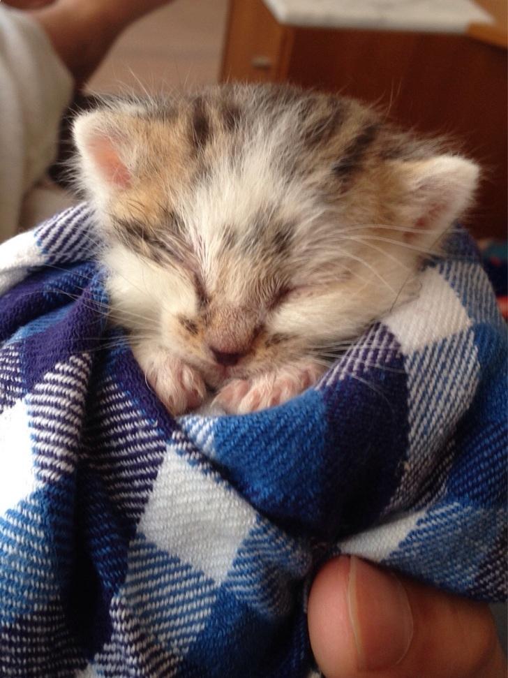милые котята, самые очаровательные котята
