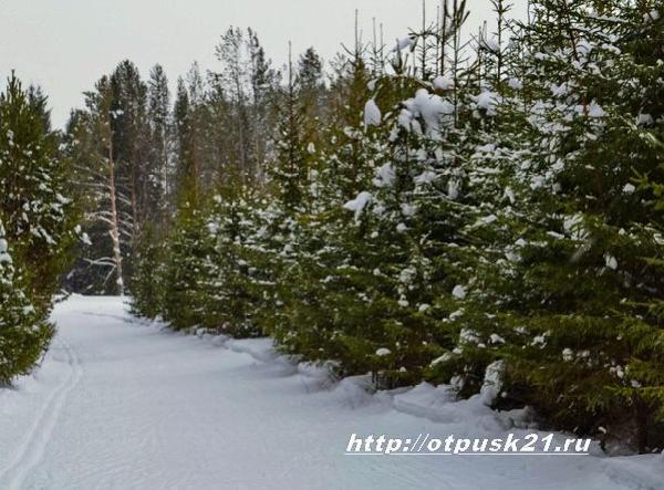 чудеса зимнего леса, прогулка по зимнему лесу