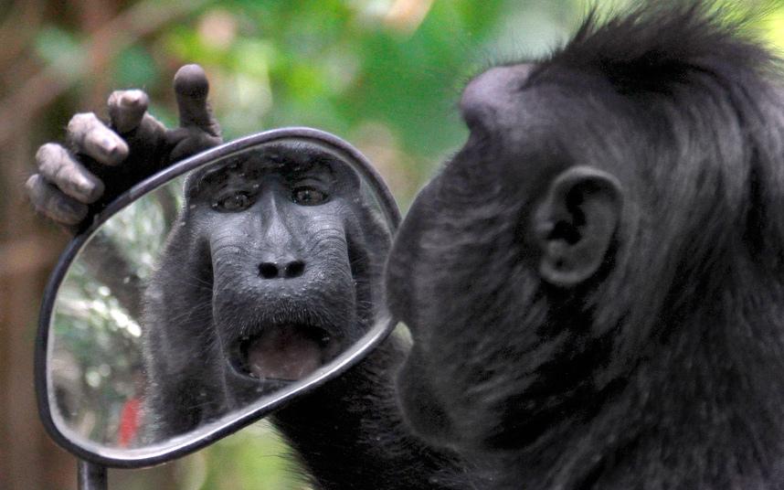 Штативы для зеркальных фотоаппаратов обзор быть