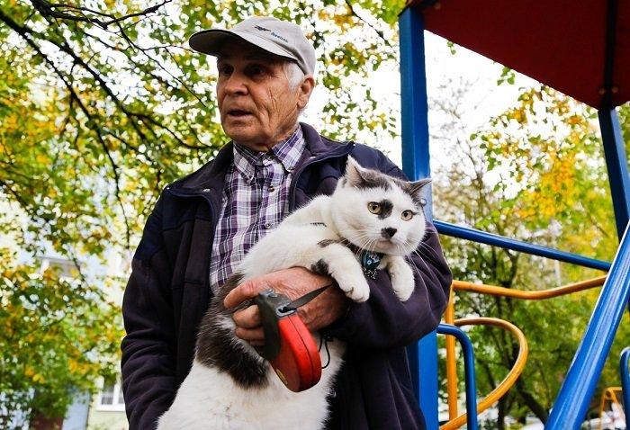За этого кота предлагали 450 тысяч рублей животные, история, кошки