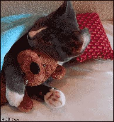 кот, позитив, животные