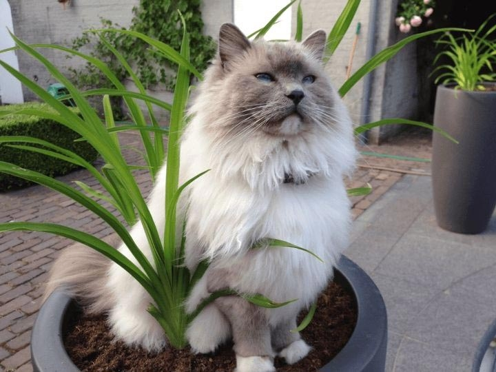 коты в цветочных горшках, расцвели коты, весна расцвели коты