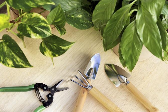 Благоприятные дни для посадки и пересадки комнатных растений в 2017 году