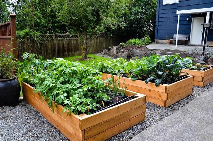 Деревянные доски - эффективный, эргономичный и доступный материал для ограждения грядок и цветников.
