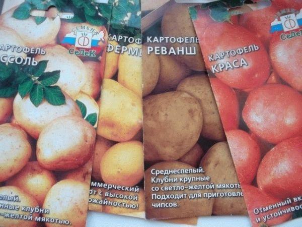 Лучшие сорта картофеля семенами: посадка и уход