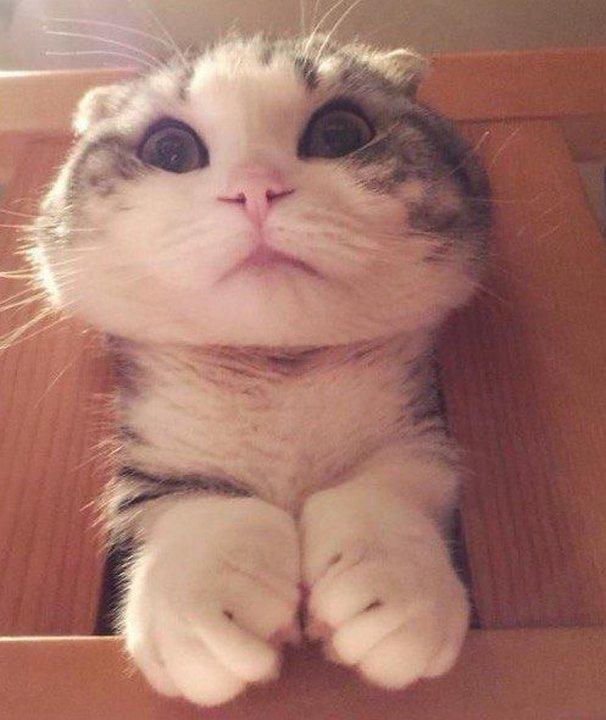 Смешные картинки до слез котов
