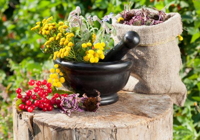 Цветы Травы