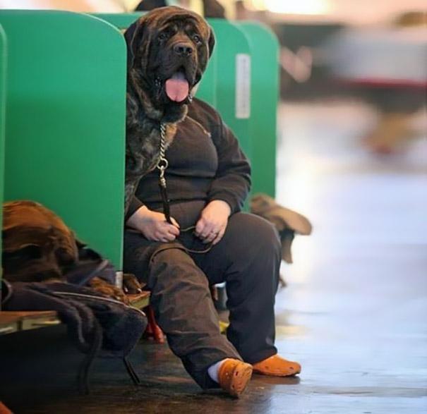25 удачных кадров с собаками-84