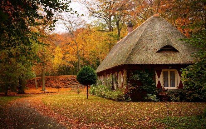 houseinwood03 Самые красивые дома в лесу