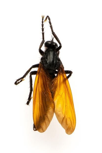 насекомые выглядят как другие животыне насекомые, насекомые похожие на других, маскировка насекомых