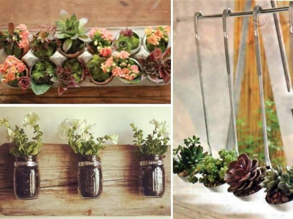 Куда посадить комнатные растения