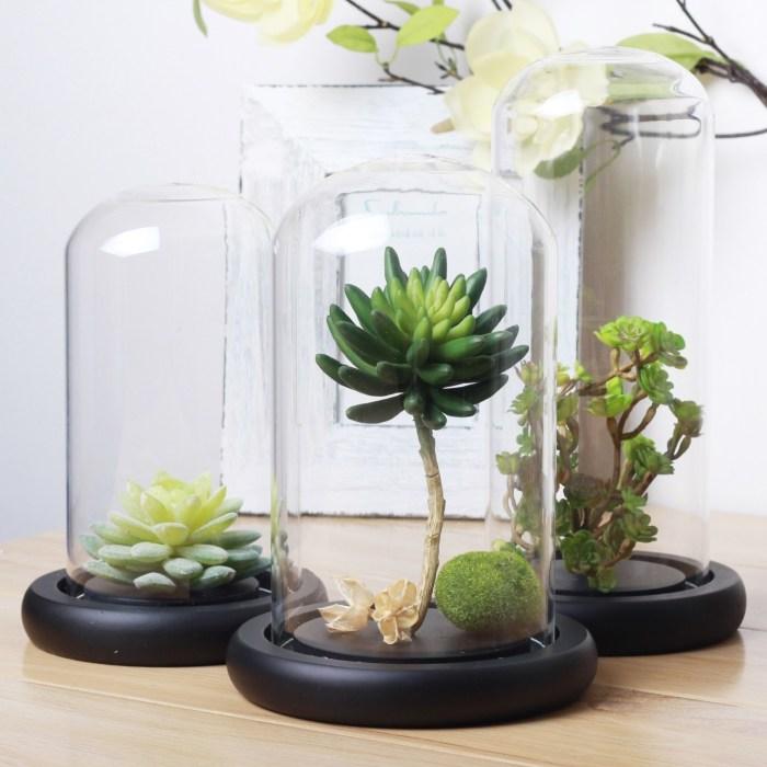 Мини-террариум из стеклянной банки может стать прекрасным украшением для любого помещения.