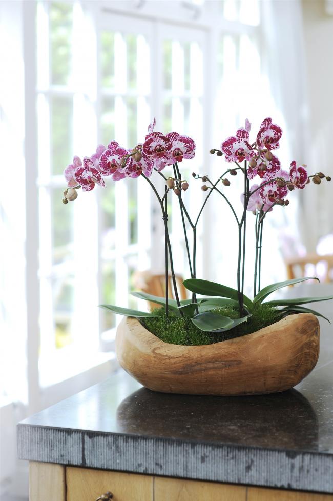 В просторный деревянный горшок вот такой необычной формы вы также можете посадить несколько растений