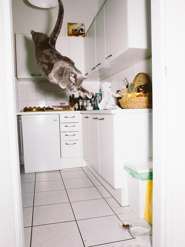 Летающие коты, эпичные прыжки кошачьих, кошки сфотографированные во время прыжка