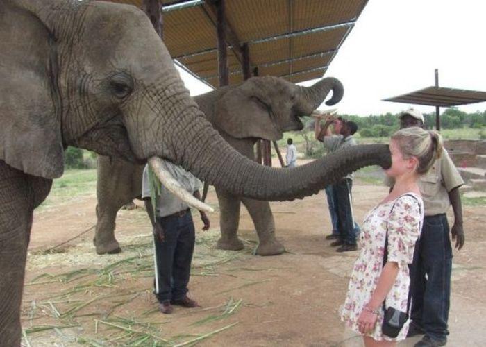 Картинки по запросу Животные против женщин