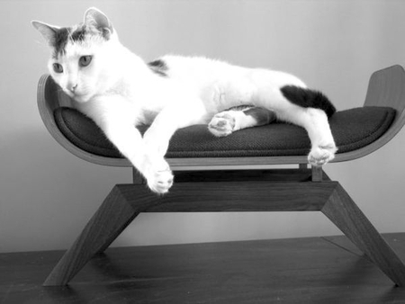 Спальня для любимой кошки: 10 милых идей фото 6