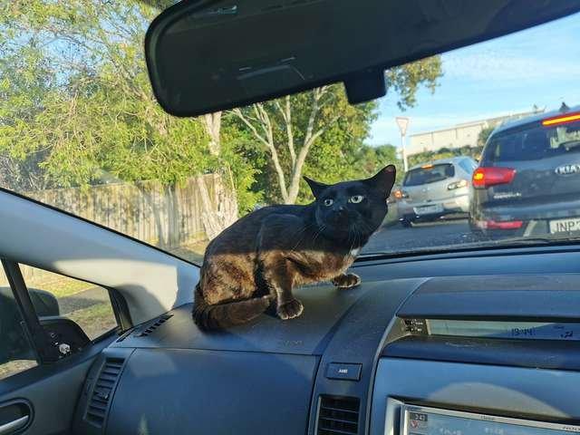 Кот пробрался в машину и внезапно возник во время обычной поездки в школу (4 фото)
