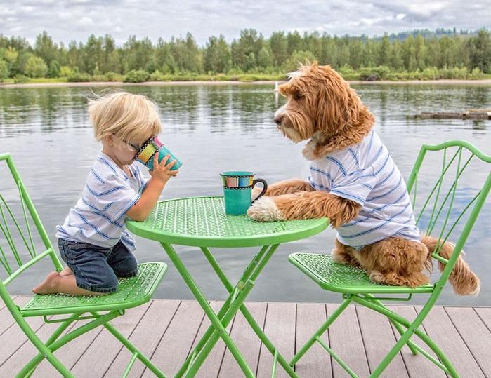 foster-child-labradoodle-dog-book-buddy-reagan-13