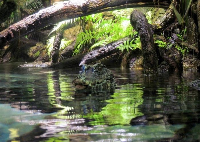 Река населена редкими представителями животного мира, многих из которых вообще нигде на планете нет / Фото: postila.ru