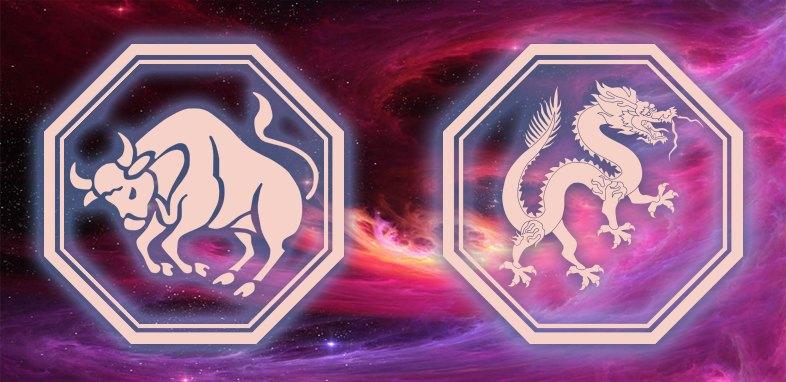 Телец дракон и телец кот