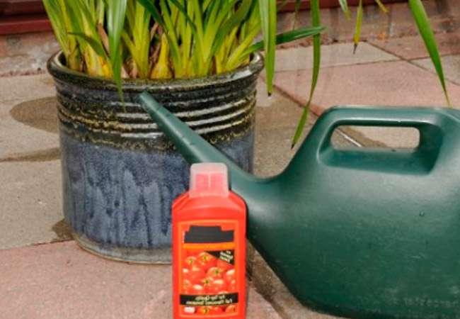 Как правильно поливать удобрением орхидею