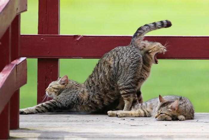 Какой-то подозрительный кот.   Фото: Karma Decay.