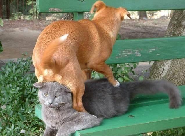 картинки смешные про кошек и собак