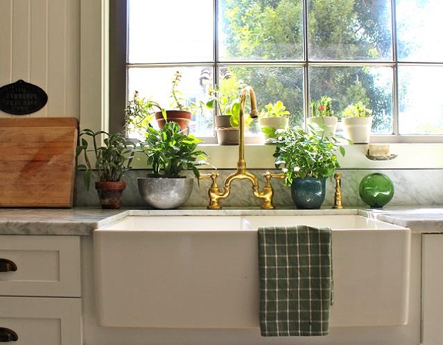 Какие комнатные растения выбрать для кухни