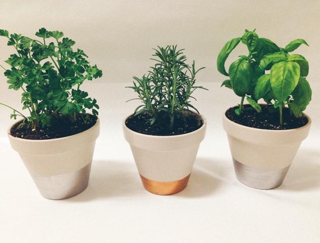 herbs-1