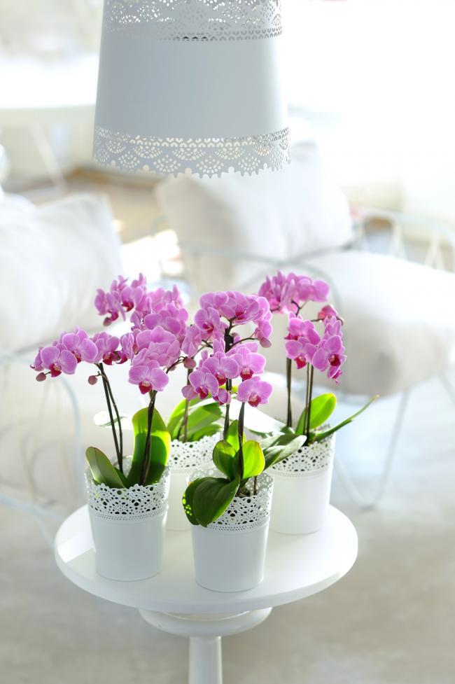 Скачать бесплатно книгу по уходу за орхидеями
