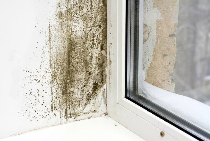 Профилактика появления плесени и грибка в доме.