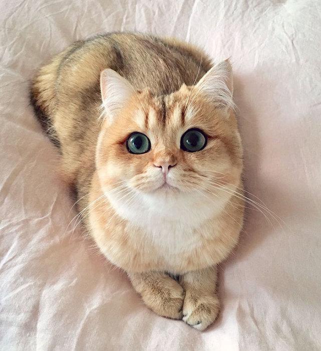 Котёнок по имени Тыковка с безукоризненной подводкой для глаз.