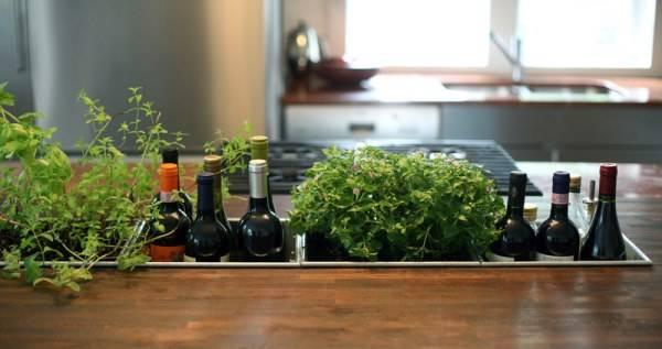 Выращивание специй дома