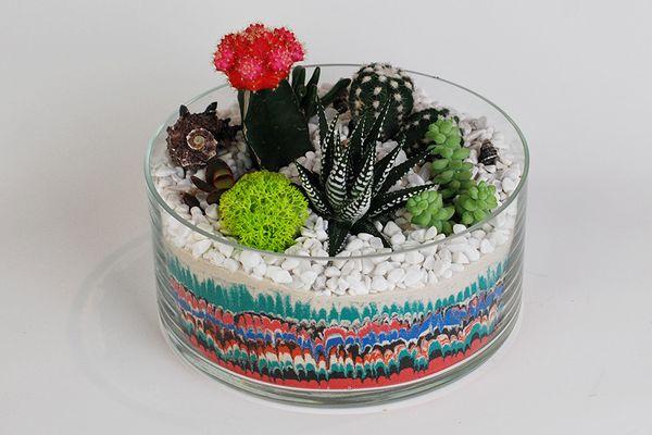 Суккулентовый либо кактусовый флорариум