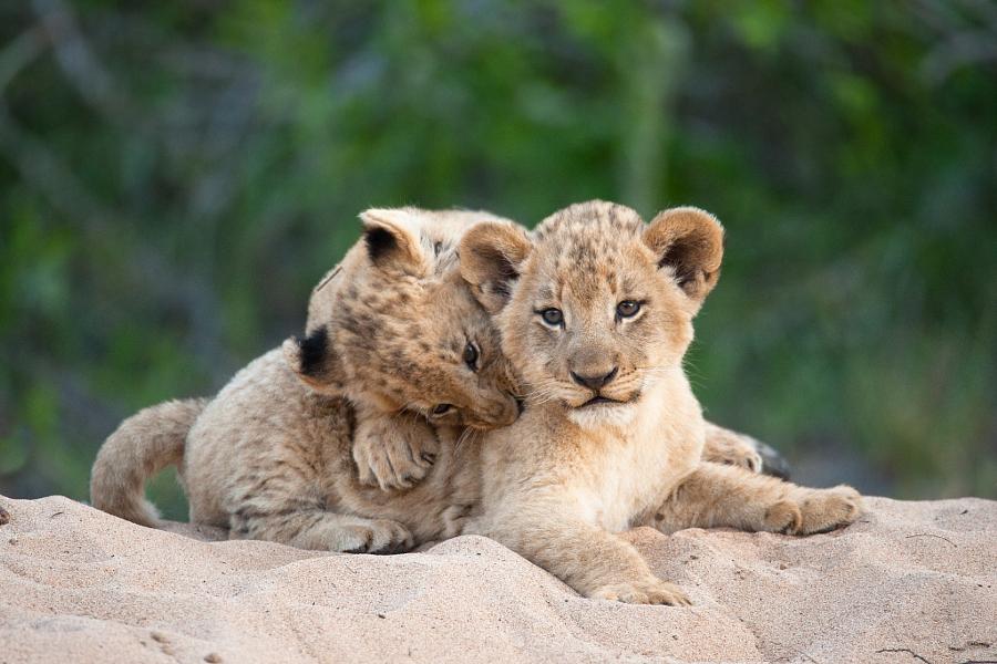 дикие милые животные фото