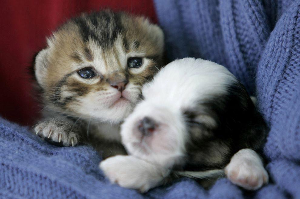 Маленькие щенки и котята в картинках