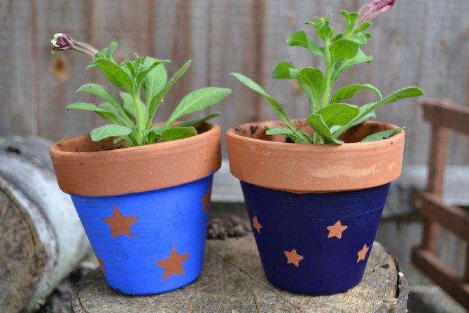 Как правильно подобрать горшок для комнатных растений?