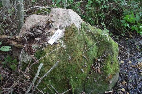 Картинки по запросу камень ревун беларусь
