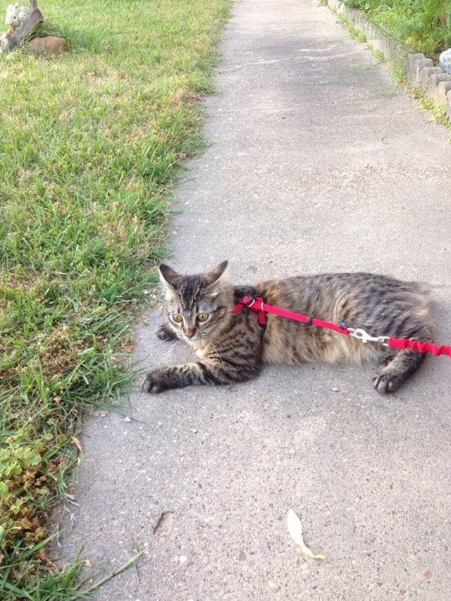 первая прокулка кошки на улице, реакция котов на первую прогулку, кошка впервые на улице