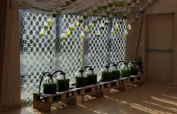 Технологии будущего: шторы из водорослей.