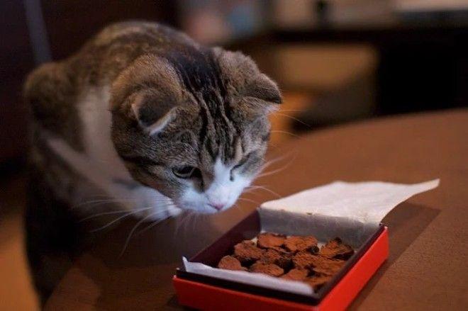 20 фактов о кошачьих которые вы 100 не знали