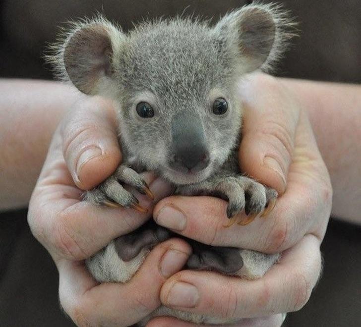 милые дикие животные, детёныши диких животных