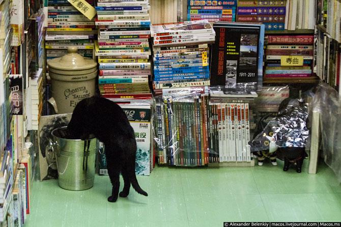 Кошки и книжки госпожи Чан