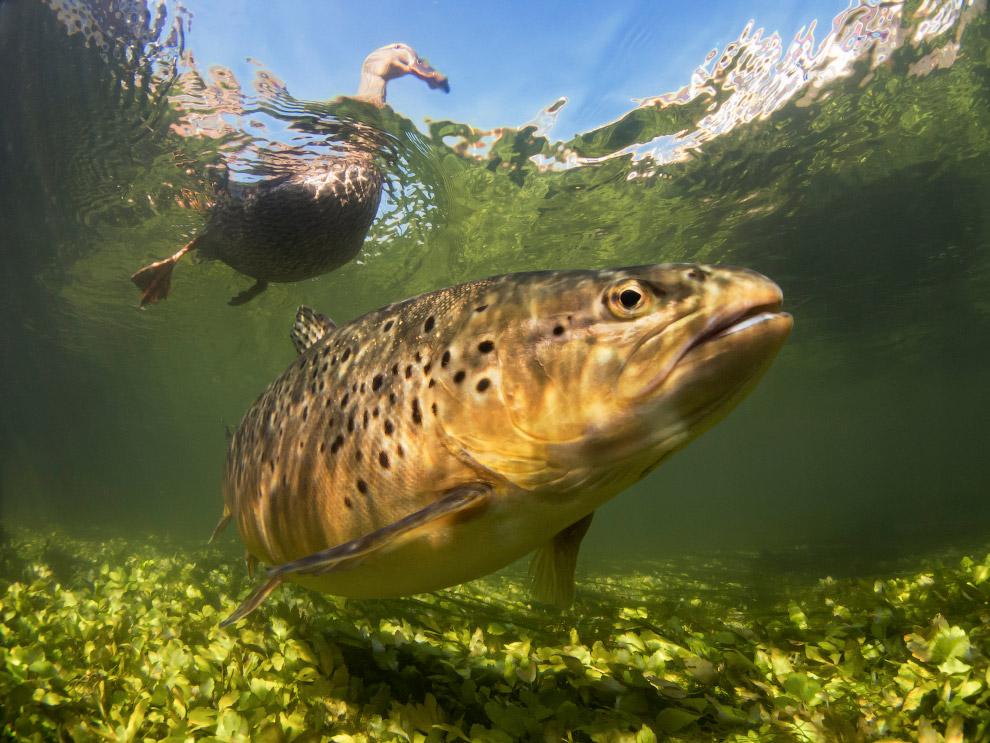 фото речной рыбы под водой глубокой