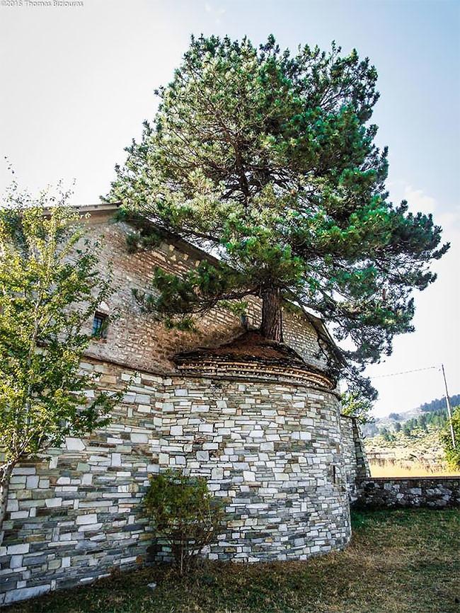 Природа взяла верх: столетнее дерево проросло через старую церковь дерево, достопримечательности, интересно, красиво, мир, планета, природа, фото
