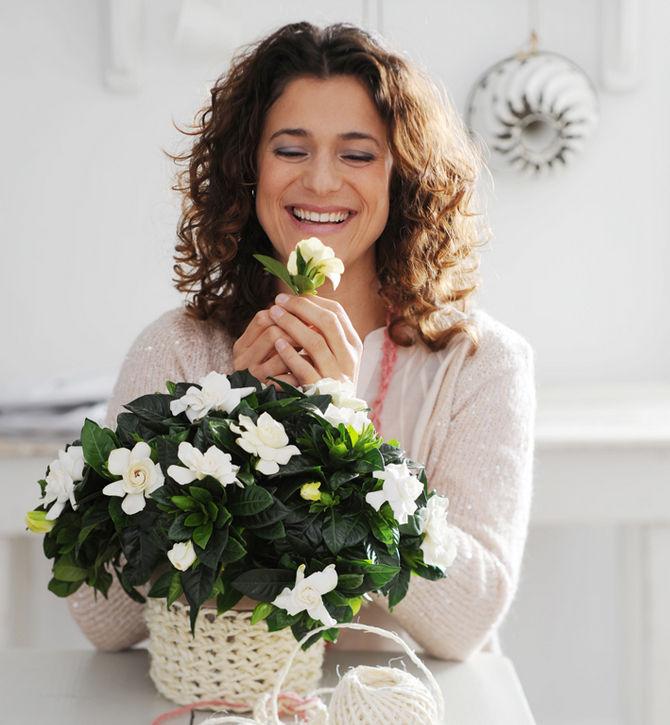 Самые популярные ароматные комнатные растения