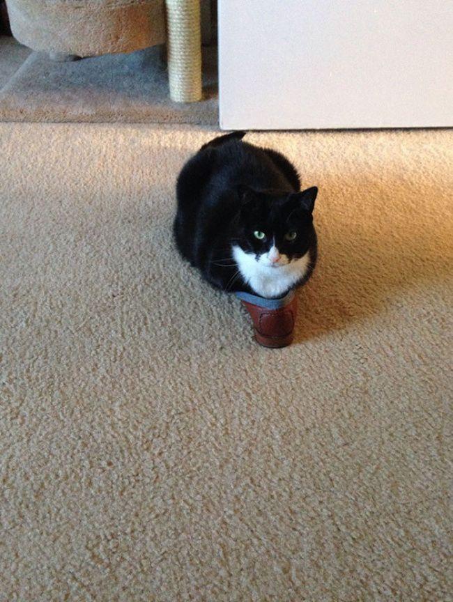 Кошки — это жидкость (17 фото)